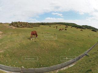 与那国島馬の写真・画像素材[944029]
