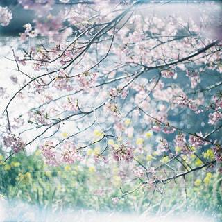 近くの木のアップの写真・画像素材[945421]