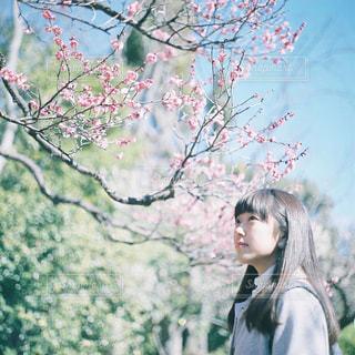 木の隣に立っている女性の写真・画像素材[945791]