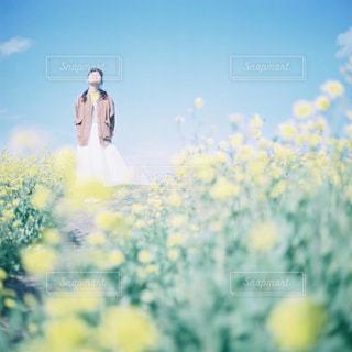 近くの花のアップの写真・画像素材[945793]