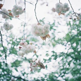 枝上の花の花瓶の写真・画像素材[946726]