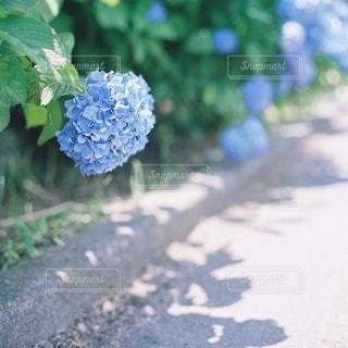 近くの花のアップの写真・画像素材[946733]
