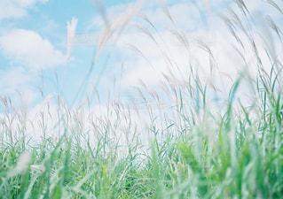 近くにいくつかの草のアップ - No.947175