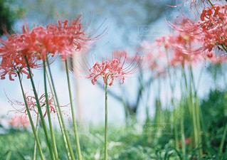 近くの花のアップの写真・画像素材[949042]