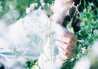 近くの花のアップの写真・画像素材[997559]