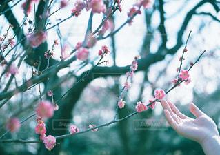 花を持っている手 - No.1002216