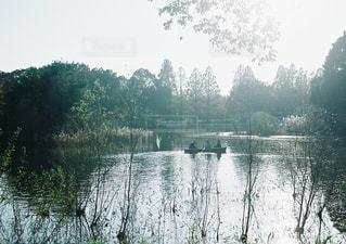 水体の茂みのグループの写真・画像素材[1002219]