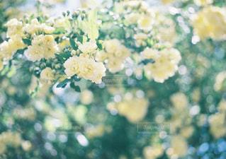 近くの花のアップの写真・画像素材[1002223]