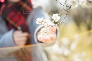 近くの花のアップの写真・画像素材[1010180]