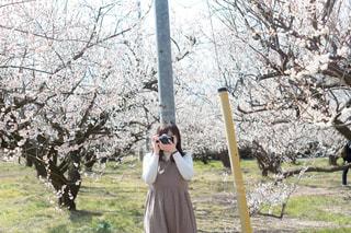 木の隣に立っている人の写真・画像素材[1015498]