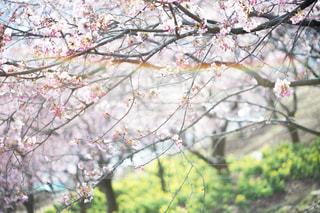 近くの木のアップの写真・画像素材[1020718]