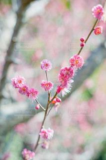植物にピンクの花の写真・画像素材[1026109]