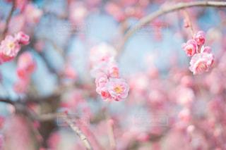 近くの花のアップ - No.1035908