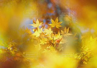 近くの花のアップの写真・画像素材[1059673]