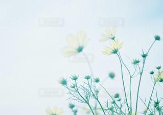 テーブルの上の花の花瓶の写真・画像素材[1059887]