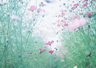 近くの花のアップの写真・画像素材[1059888]