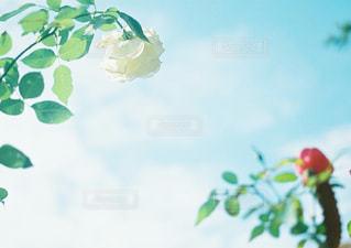 近くの花のアップの写真・画像素材[1059889]