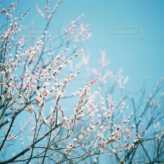 花の写真・画像素材[1093397]