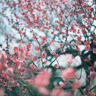 花の写真・画像素材[1093400]