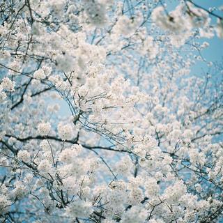 茂みや木のグループの写真・画像素材[1145486]