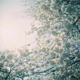 近くの木のアップの写真・画像素材[1145487]
