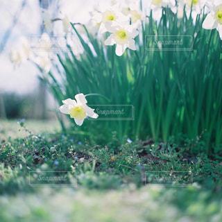 近くの花のアップの写真・画像素材[1145488]
