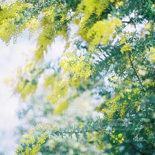 近くの木のアップの写真・画像素材[1145490]