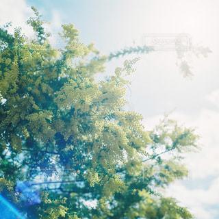 近くの木のアップの写真・画像素材[1145491]