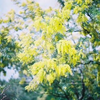 近くの花のアップの写真・画像素材[1145492]