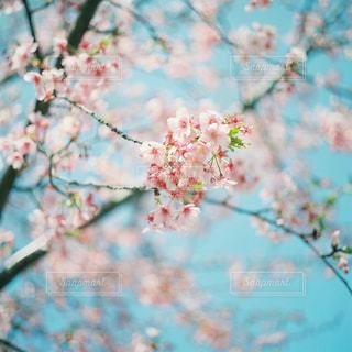 近くの木のアップの写真・画像素材[1145493]