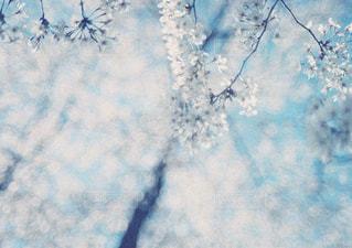 近くの木のアップの写真・画像素材[1145497]