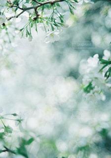 木の枝に花の花瓶の写真・画像素材[1145501]