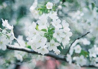 近くの花のアップの写真・画像素材[1145504]