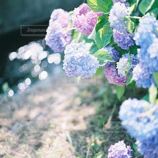 近くの花のアップの写真・画像素材[1233736]