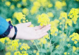 黄色い花を持っている手の写真・画像素材[1391173]