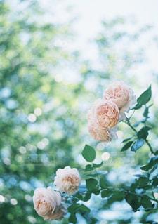 花のように鳥が止まってください。の写真・画像素材[1391174]