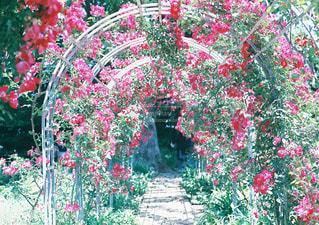 近くのフラワー ガーデンの写真・画像素材[1391175]