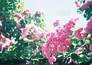 近くの花のアップの写真・画像素材[1391178]