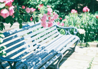 木製ベンチのピンクの花の写真・画像素材[1391179]
