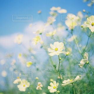 近くの花のアップの写真・画像素材[1616444]