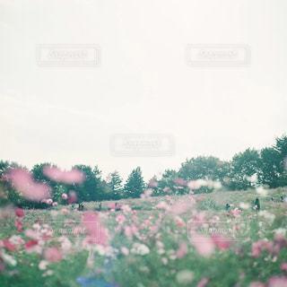 近くのフラワー ガーデンの写真・画像素材[1616445]