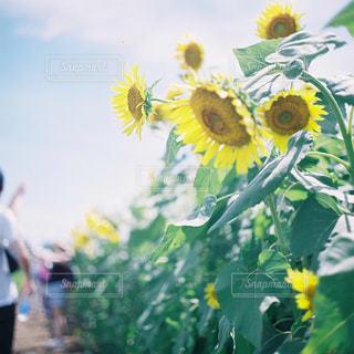 近くの花のアップの写真・画像素材[1616448]