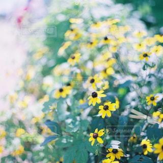 近くの花のアップの写真・画像素材[1616450]