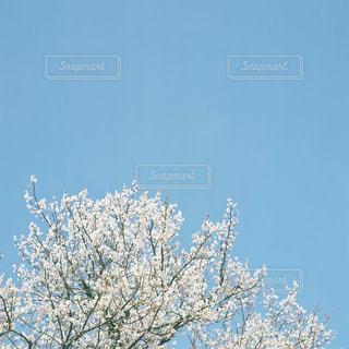 近くの木のアップの写真・画像素材[1813758]