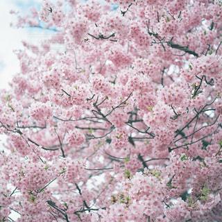 花の写真・画像素材[2058863]
