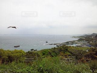 鳥 - No.945520