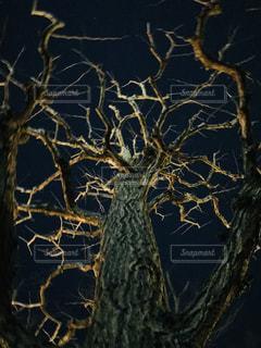 夜の木 - No.955916