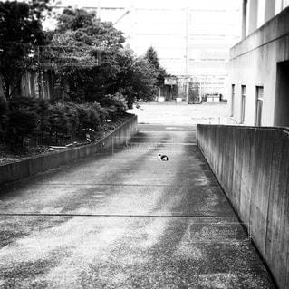 猫の写真・画像素材[1396512]