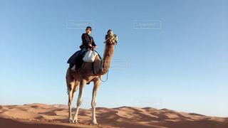 砂漠でラクダに乗る人の写真・画像素材[1873251]