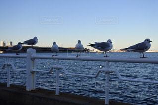 水の体の横にドックの上に立ってカモメの群れの写真・画像素材[966356]